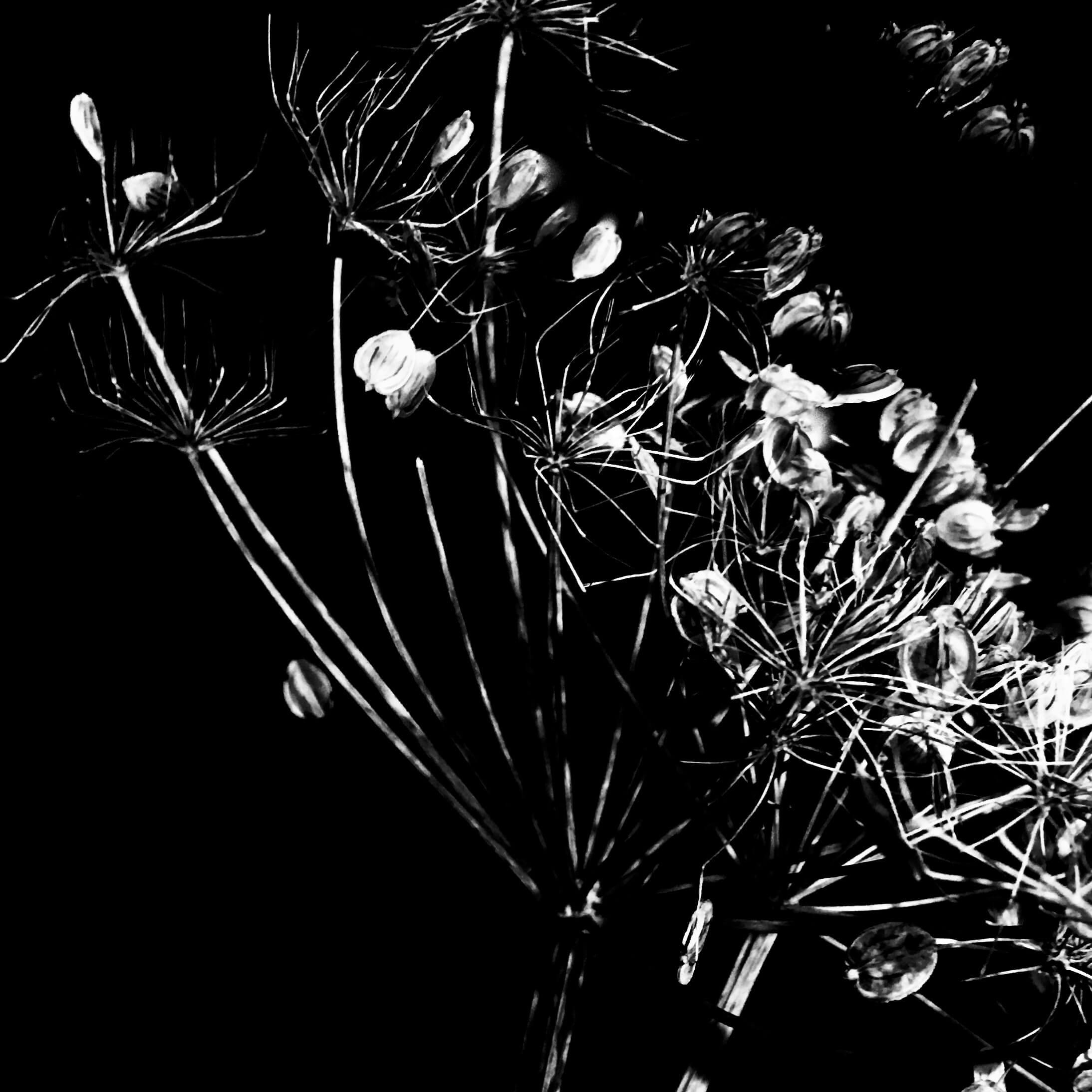 Fragment végétal